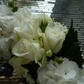 Sumptuous flowers
