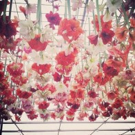 Amaryllis ceiling!